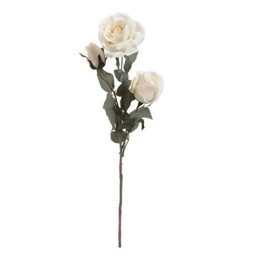 róża gałązkowa 3 kwiaty