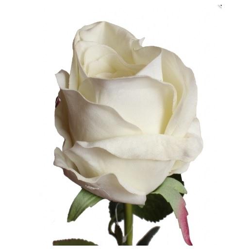 róża gałazkowa szczegóły